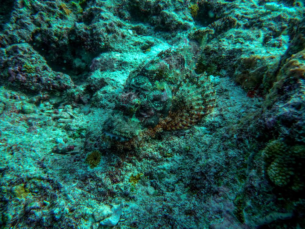 http://www.duskrider.narod.ru/foto13-2/maldives53.jpg
